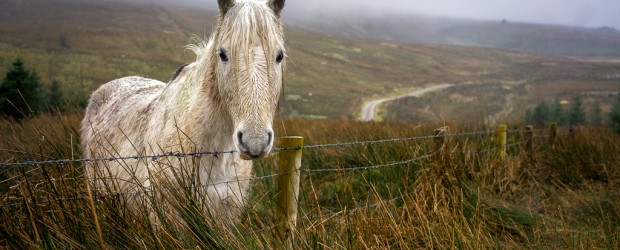 Pony in the Rain